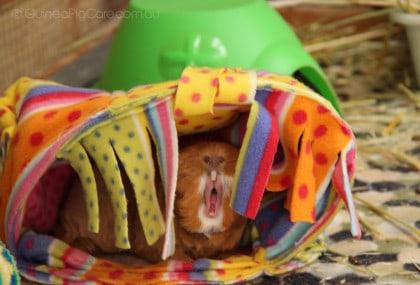 Fluffball Yawning