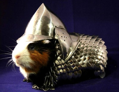 Guinea Pig Armor Front