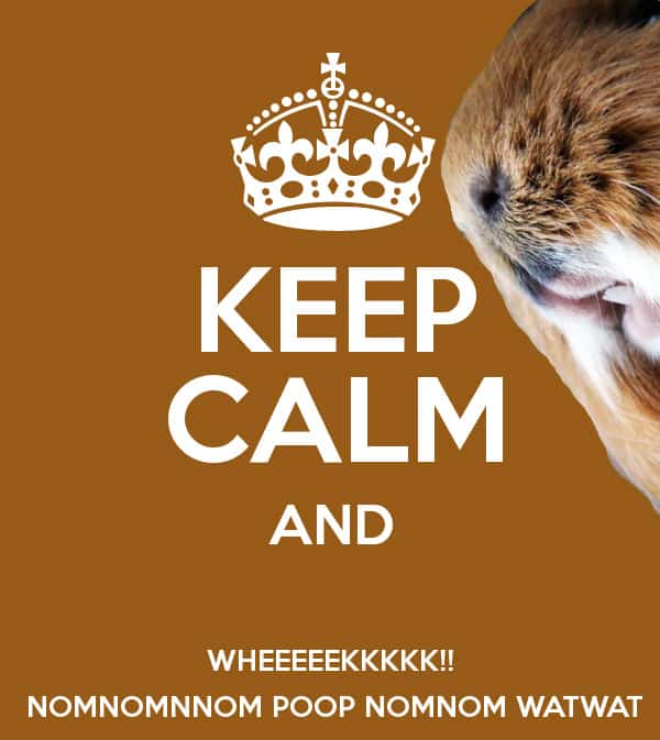 keep calm and wheeek