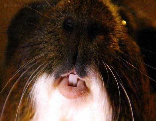 Up close photo of piggy