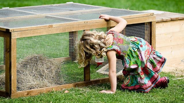 Outdoor Rabbit Run