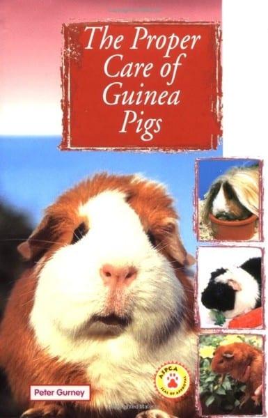 Proper Care of Guinea Pigs on Amazon