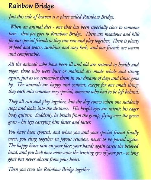 Adorable image with rainbow bridge poem for dogs printable